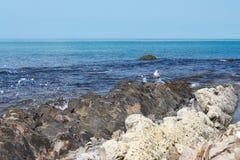 在美丽的石海滨的海鸥反对风平浪静 免版税库存照片