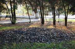 在美丽的秋天公园的道路 平静的秋天心情 免版税库存照片