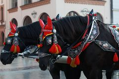 在美丽的红色串珠的鞔具的黑马 图库摄影