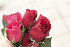 在美丽的红色玫瑰 免版税库存照片