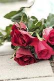 在美丽的红色玫瑰 免版税库存图片