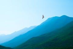 在美丽的绿色有薄雾的山的老鹰飞行 库存照片