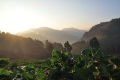 在美丽的草莓农场的早晨 库存照片