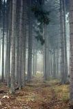 在美丽的雾的树 库存照片
