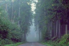 在美丽的雾的树 免版税库存图片