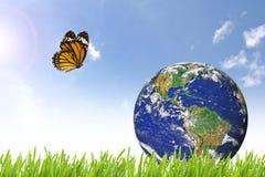在美丽的绿草的蝴蝶和行星地球 免版税库存图片