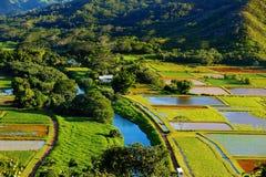 在美丽的Hanalei谷的芋头领域 图库摄影