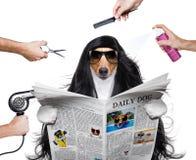 在美发师的修饰狗 免版税库存图片