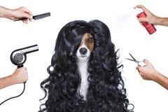 在美发师的修饰狗 免版税库存照片