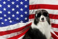 在美国旗子前面的博德牧羊犬与太阳镜 免版税库存图片