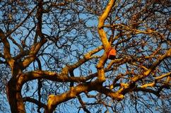 在美国梧桐树分支的鸟舍  库存图片