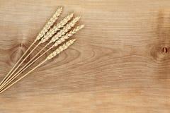 在美国梧桐的麦子 库存照片
