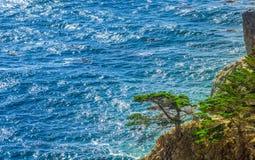 在美国西海岸的绿色幽静杉木 库存图片