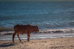 在美奈海滩,藩切,越南南部-亚洲的日落 图库摄影