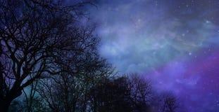 在美好的冬天夜空背景的最基本的树 库存图片