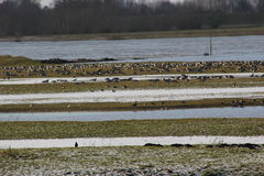 在美好的冬天风景的鸟 免版税库存照片