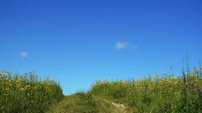 在美好的夏天领域的乡下公路与野花 股票录像