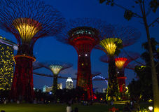 在美好的夜照明的不可思议的supertrees 免版税库存图片