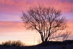 在美好的日落的美丽的树 库存图片