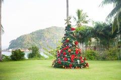 在美好的热带背景的圣诞树 免版税库存图片