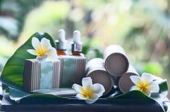 在美好的热带背景的自然化妆用品 库存照片