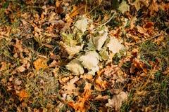 在美好的秋天的黄色,橙色和红色秋叶停放 库存图片