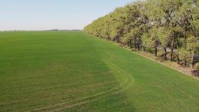 在美好的绿色风景的飞行 股票视频