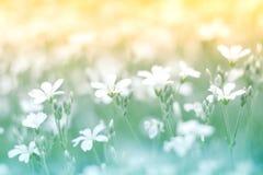 在美好的背景的精美矮小的白花与柔和的口气 五颜六色花卉的背景 库存图片
