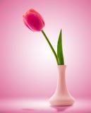 在美好的背景的红色郁金香花 免版税库存图片