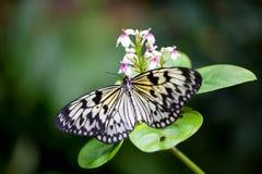 在美好的背景的蝴蝶 免版税库存照片