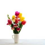 在美好的背景隔绝的红色郁金香花 免版税库存照片