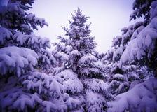 在美好的雪盖下的圣诞树。冬天风景 免版税图库摄影