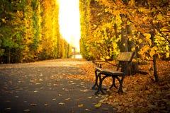 在美好的黄色公园风景的空的长凳 免版税库存图片