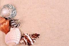 在美好的黄沙背景的海壳 库存图片