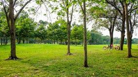 在美妙的公园放松 库存照片