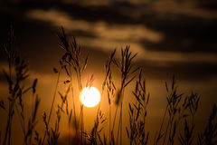 在美妙的日落光的草风景 免版税库存图片