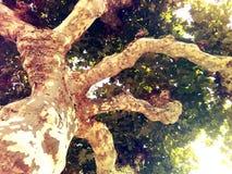 在美妙的秋天的分支下穿戴了树 免版税库存图片