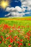 在美妙绿色草甸的日落之上 免版税库存照片