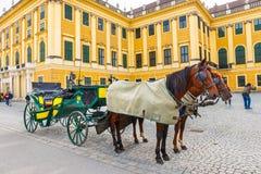在美泉宫大广场的马支架在维也纳,奥地利 库存图片