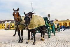 在美泉宫大广场的马支架在维也纳,奥地利 免版税库存照片