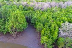 在美洲红树森林上看法在泰国 图库摄影