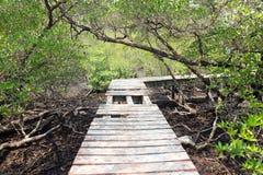 在美洲红树森林的残破的木桥 库存照片