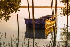在美洲红树停泊的渔船。 免版税库存图片