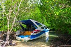 在美洲红树树的失去的小船 免版税图库摄影