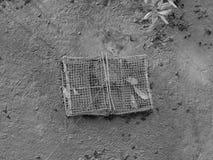 在美洲红树森林上泥泞的地面的被放弃的净笼子  免版税库存照片