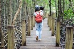在美洲红树森林的桥梁 免版税图库摄影