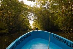 在美洲红树的小船乘驾在里约达尔西危地马拉附近 库存照片