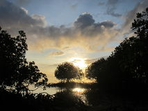 在美洲红树的日出 图库摄影