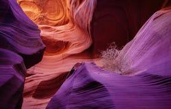 在羚羊峡谷风滚草的一个亲密的场面 免版税图库摄影