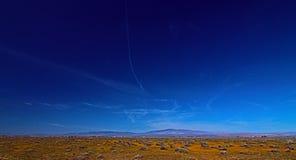 在羚羊谷的加利福尼亚高沙漠野花在南加州 免版税库存图片